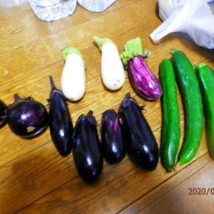 収穫(3)