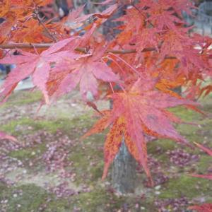 秋は京都の紅葉