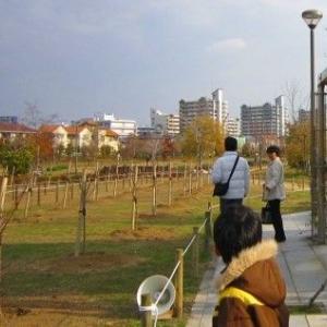 芦屋市政施工70周年記念植樹アーモンド