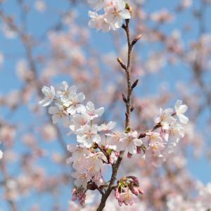 鎌倉・玉縄桜フォトレッスン開催しました