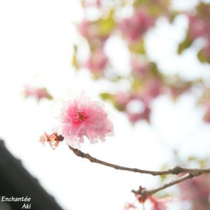 春の女子カメラ撮影会@かまくら