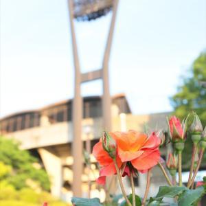 平塚総合公園のバラ園@夕暮れ