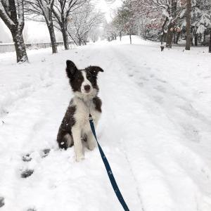 とうとう雪が!