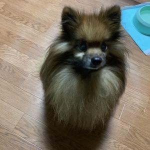 長寿犬表彰
