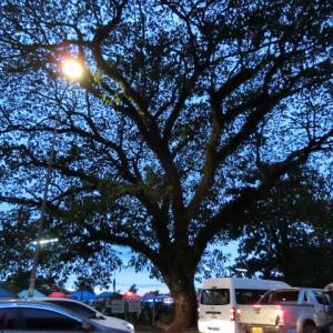 メコンの夕日は70点と60点