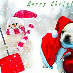 Merry Christmas !!!