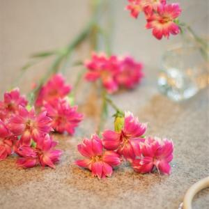 お菓子のように可愛らしいピンク色の花!