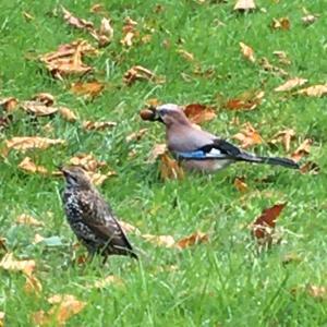 チュイルリー公園で鳥のフン