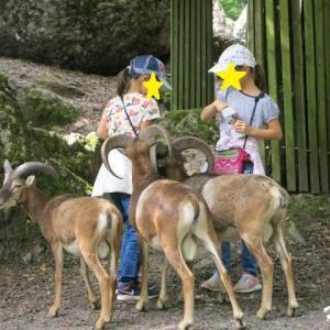 我が家の夏2021~娘にたかる・・・Tierpark Goldau~