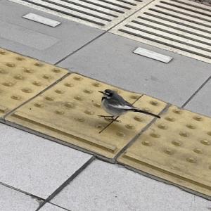 鳥たちよ〜