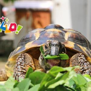 お庭でお散歩して小松菜食べてお花を見たよ