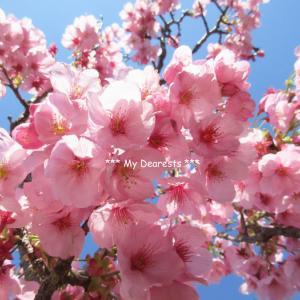 桜餅の想い出