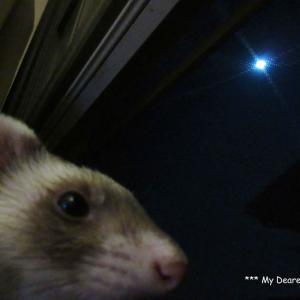 お月様とリンドウ
