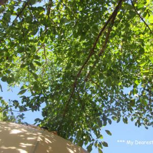 木漏れ日の下