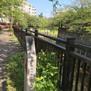石神井川をぶらりと歩く