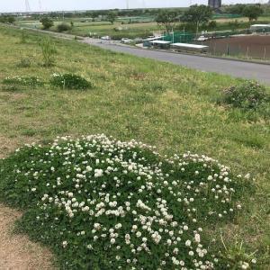 埼玉編・河川敷サイクリング