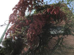 木の実か花か、気になる風景