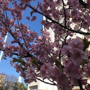 見上げれば春が・・・