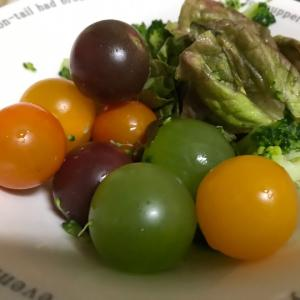 カラフルなトマト