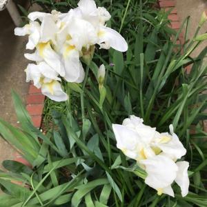 5月の時候を告げる花