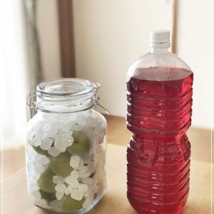 季節の仕事♪赤しそジュースと梅シロップ作り