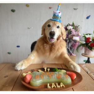 2020年6月18日。ララ11歳のお誕生日を無事に迎えることができました♪