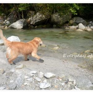 『尾白川渓谷』エメラルドグリーンの美しい川です!