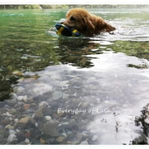 『武儀川』内緒の川遊びで気分もリフレッシュしました!
