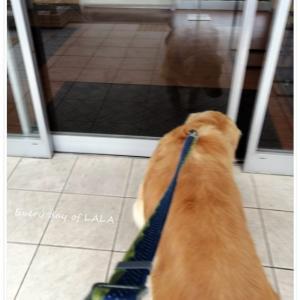 【血管肉腫】岐阜大学動物病院へ33回目の通院。全体として非常に良い状態を維持している!