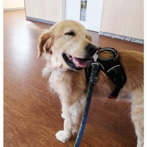 【血管肉腫】岐阜大学動物病院47回目の通院┃抗がん剤治療は延期になりました