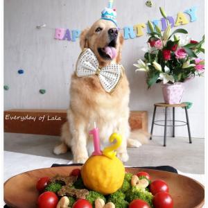 2021年6月18日┃ララ12歳のお誕生日を無事に迎えました!【動画あり】