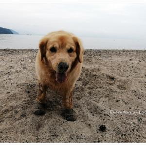 ララ12歳のお誕生日は琵琶湖で【カヤック犬】になりきる!『動画あり』