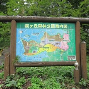 まめすけ 夏旅行2019⑰ 霞ヶ丘森林公園 『記念の森』