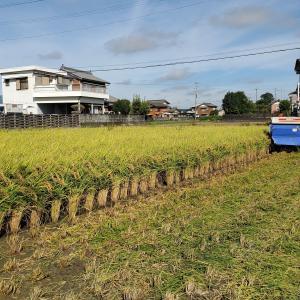 アキサカリの稲刈り