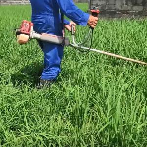 出来すぎの稲を草刈り機で刈った