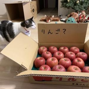 今年もりんご届きました