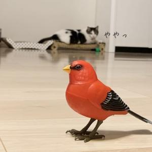 Francfrancの小鳥さん