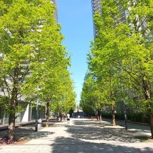 シリーズ横浜の橋_その31・・・新設橋編、キングモール橋。