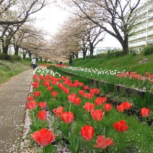 シリーズ横浜の緑道_その21・・・江川せせらぎ緑道、前編。