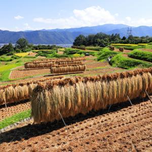 稲刈りの季節!田舎はすっかり秋!