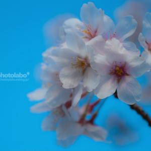 Sakura memories #01