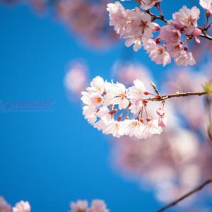 Sakura memories #02