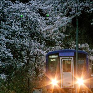 Sakura memories #03