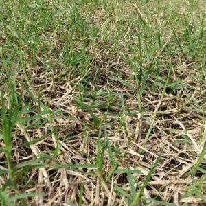 草のためたやつがなくなった。安心してはいけないのだ