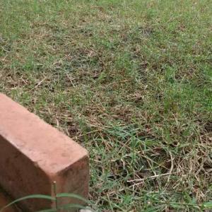 雨が降ってきたから、草取りではなく掃除機かけた