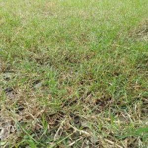 雨の前に芝刈りしたよ。汗びっしょり