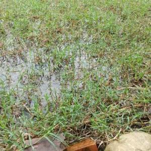 雨でも屋根の下から草取りした