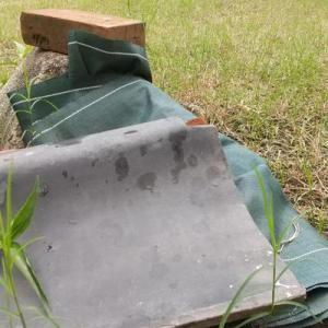 ちょっと雨降り出したけど、生け垣の剪定と草取りした
