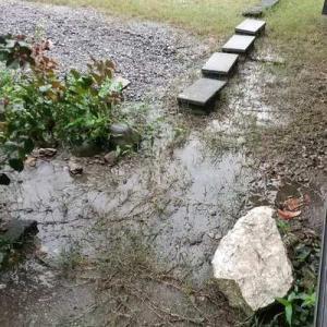 さすがに、この雨では草取りできません