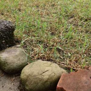 雨が降ってきたから、草取り小休止
